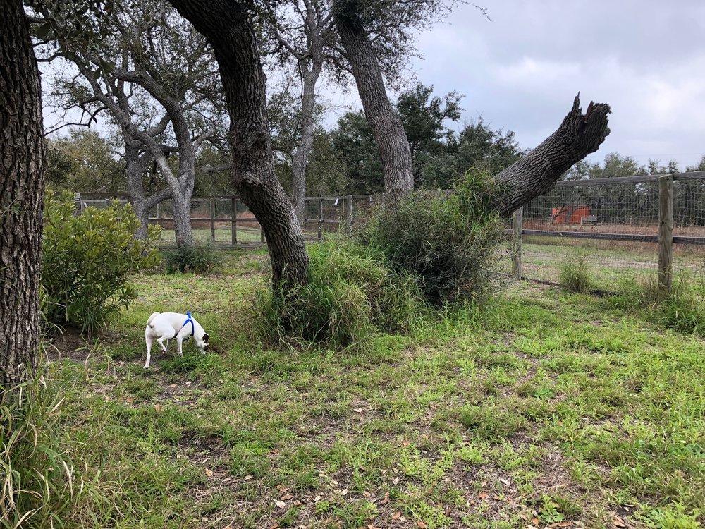 Jodi roaming the dog park.