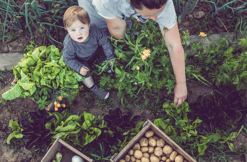 Young-Woman-With-Son-Working-in-a-Home-Grown-Vegetable-Garden-801124192_2140x1405.jpeg