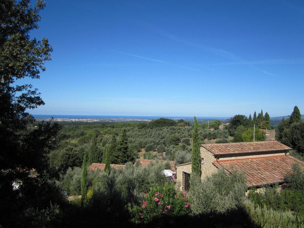 Vista su Belvedere-Sassicaia Gheppio.JPG