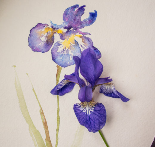 iris painting by Angela Fehr