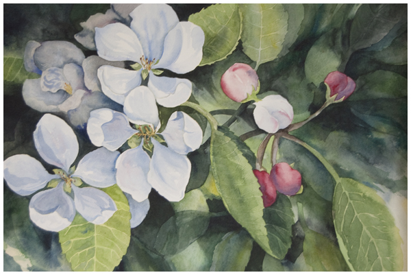 apple-blossoms.jpg