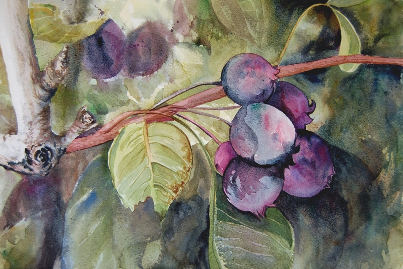 On a Limb watercolour | Angela Fehr