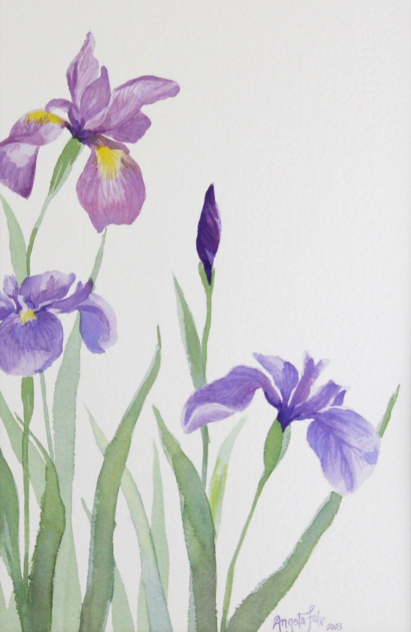 Spring's Aristocrats | watercolour by Angela Fehr