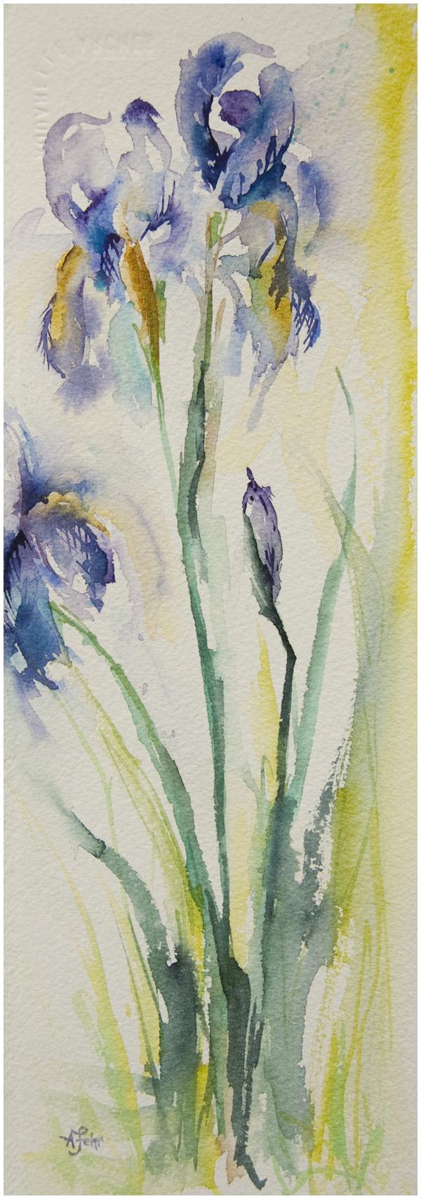 Irises in watercolour | Angela Fehr