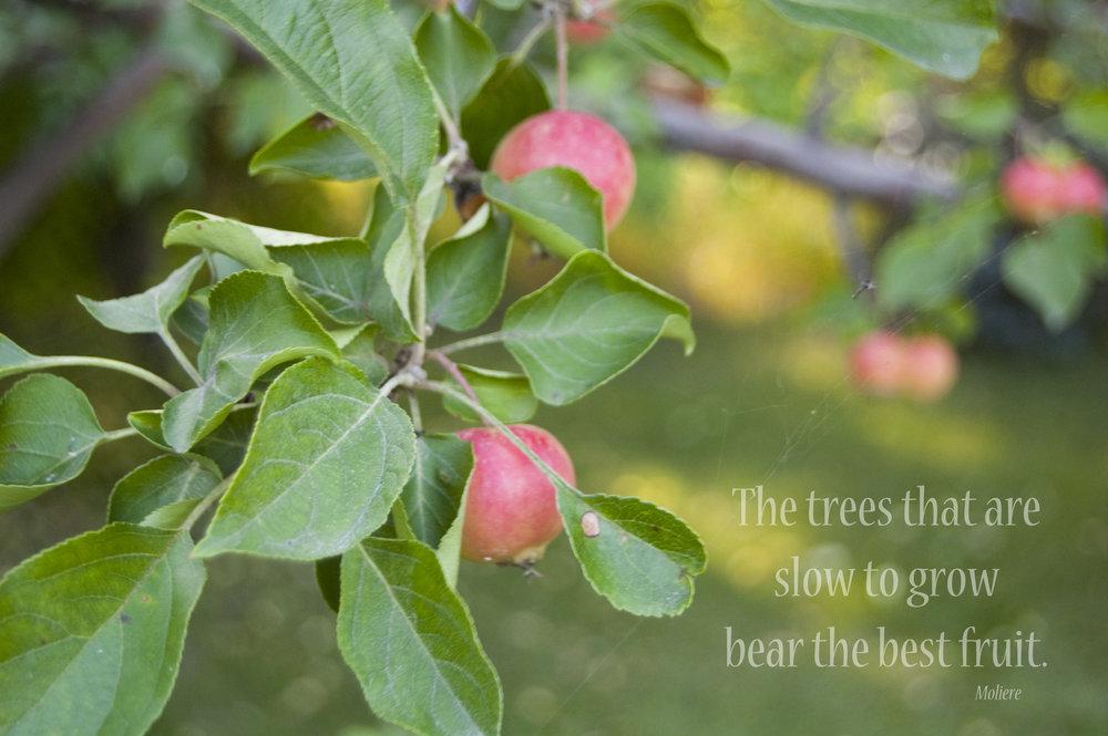 best-fruit-apples.jpg