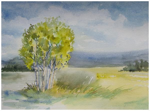 birch study 1