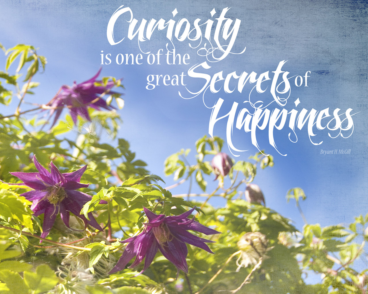 Curiosity quote | AngelaFehr.com