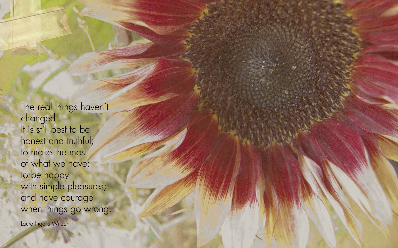 sunflower ingalls quote | Angela Fehr  watercolour art