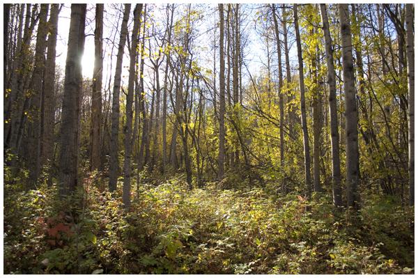 forest | Angela Fehr