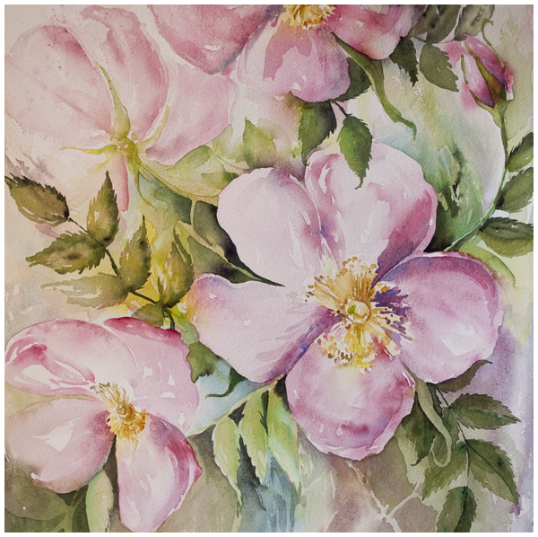 Liz's Wild Roses | Angela Fehr watercolors
