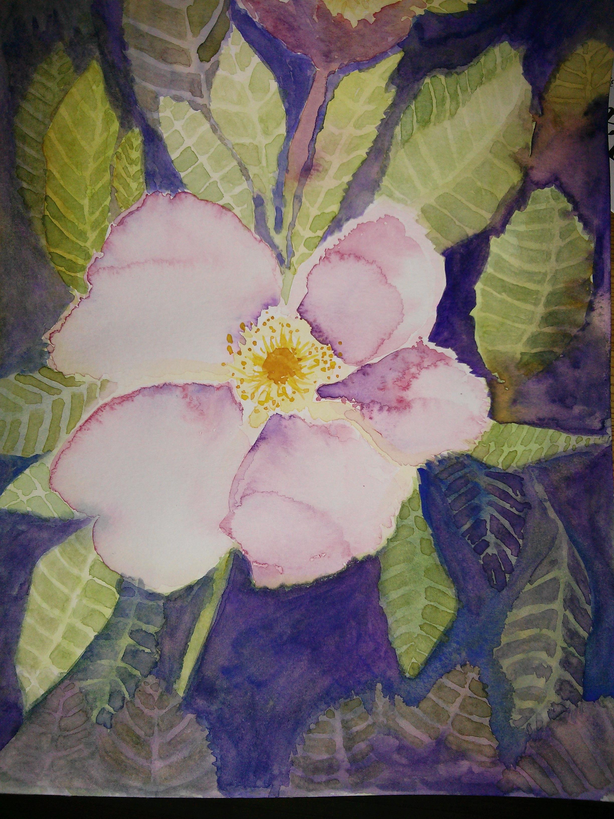 arlo wild rose