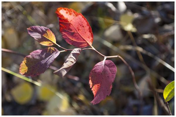 red leaves | Angela Fehr https://angelafehr.com