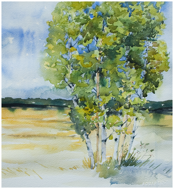 birch class study | Angela Fehr watercolours