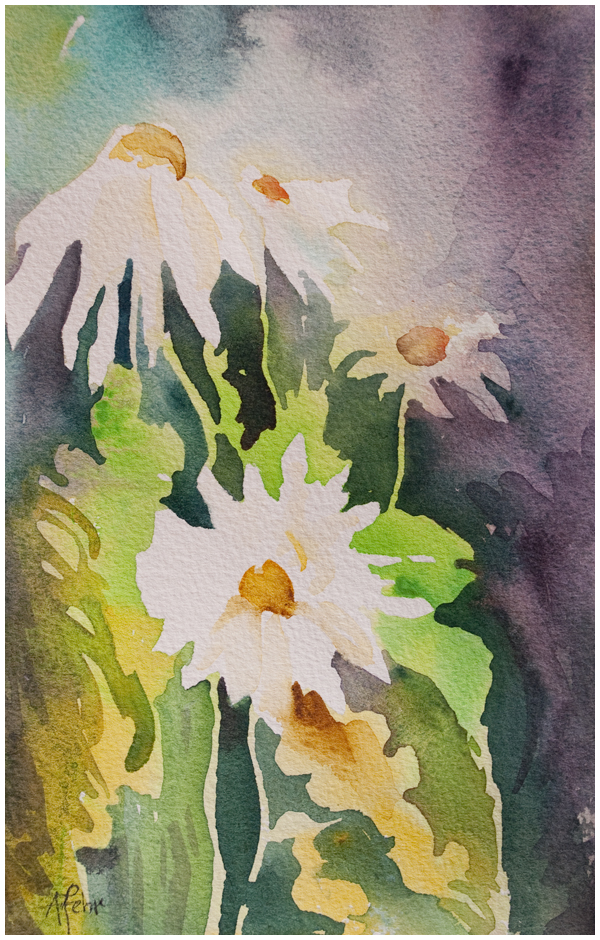 daisies 5x7 watercolor by Angela Fehr