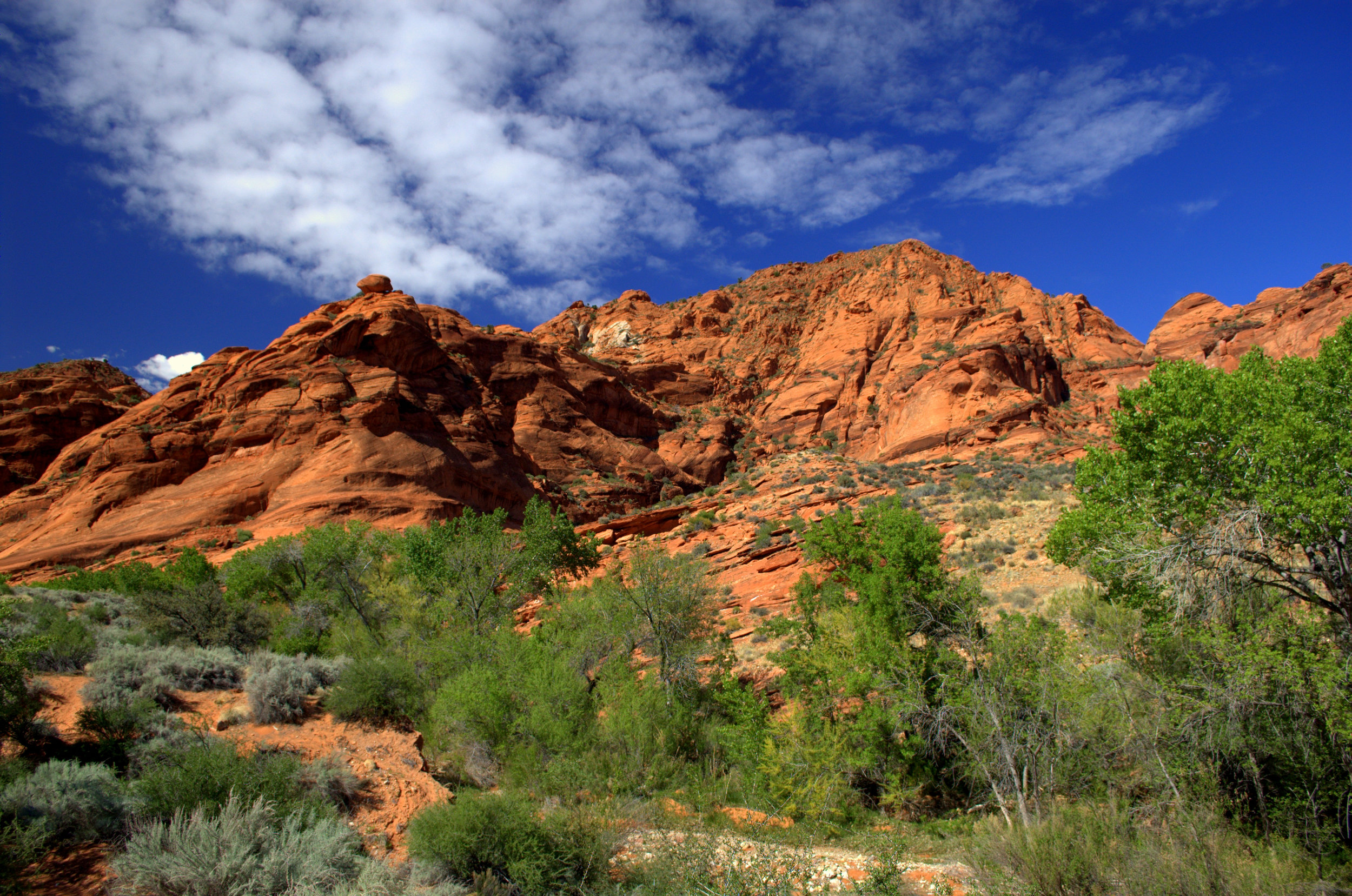 Red Cliffs Conservation Area, St. George, Utah | Angela Fehr