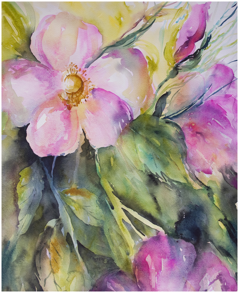 Spray of Wild Roses | watercolour by Angela Fehr https://angelafehr.com