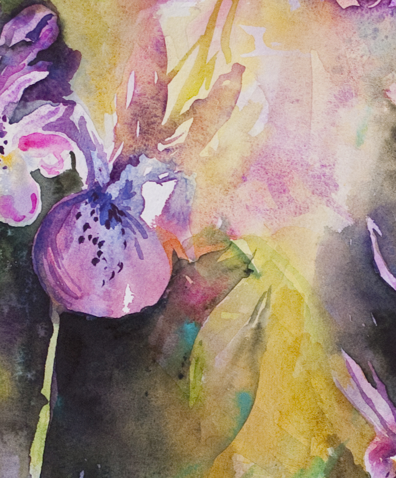 Calypsos; detail of watercolor by Angela Fehr https://angelafehr.com