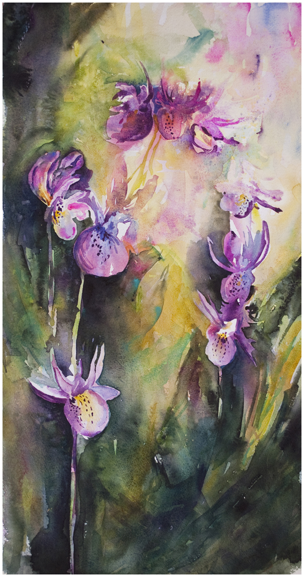 Calypso Orchids | watercolor by Angela Fehr https://angelafehr.com