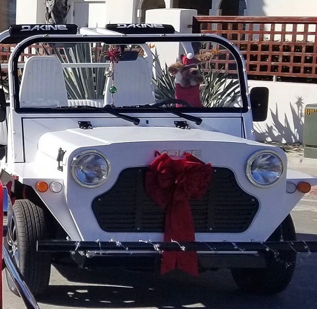 It's lovely weather for a sleigh ride together with you🎁🎅🏻🎄🤶🏻⛄️ #moke #mokeamerica #bestgiftever #bestgift #christmas #newsled