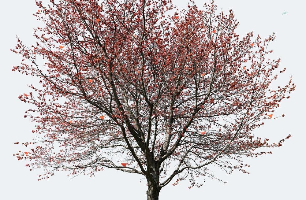 Orange Tree, 2012
