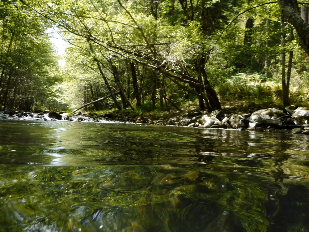 Sproul Creek  Photo by Pat Higgins