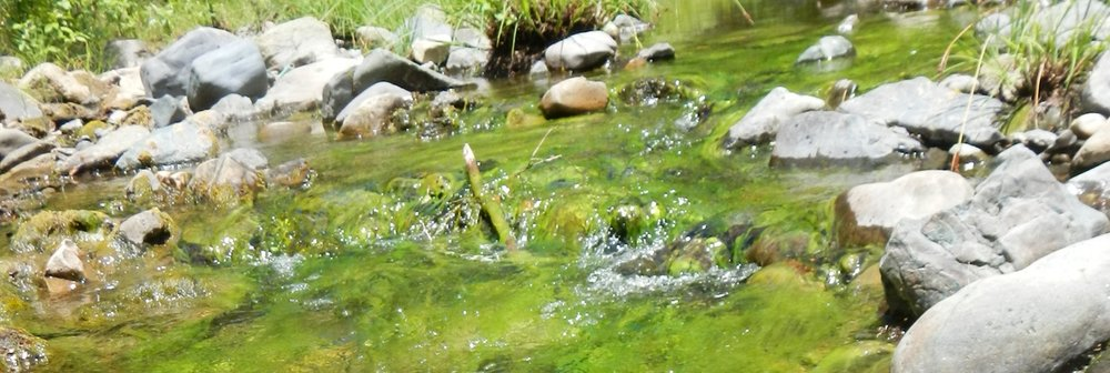 nutrient_pollution_1200x403.jpg