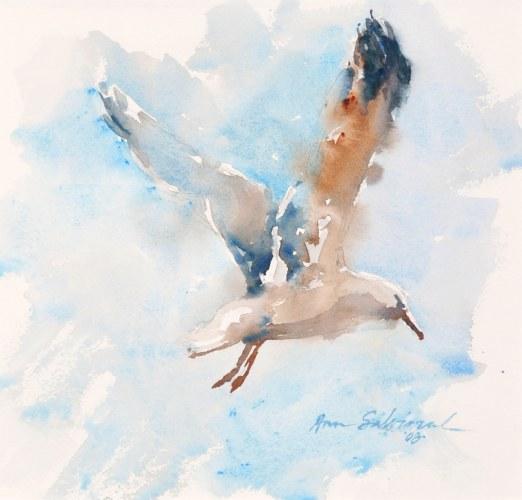 Seagull Study