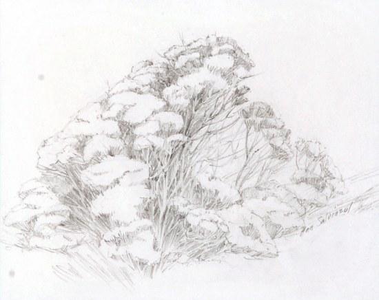 Rabbitbrush