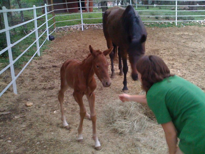 Baby Bailey getting to meet her future for the first time. Already queen of the Pissy Mare Face.