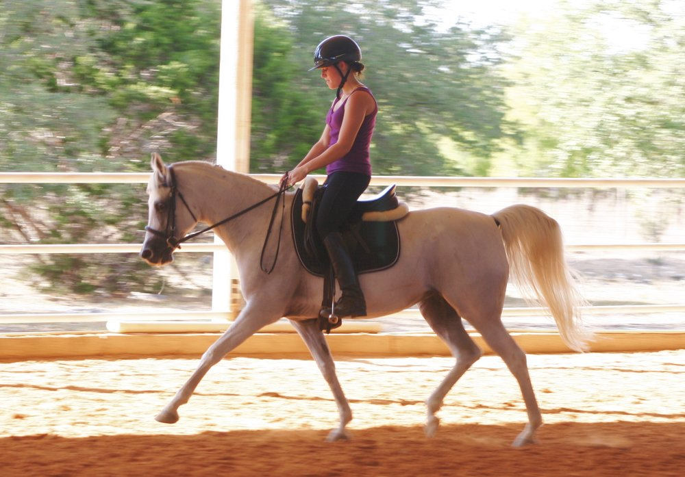 One of the Arabians I was lucky enough to learn from. The neatest mare.