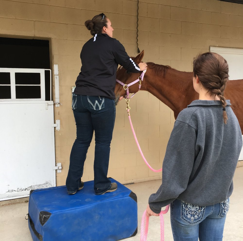 Obligatory photo of Maria being worked on by her highly qualified Equine Chiropractor/DVM.