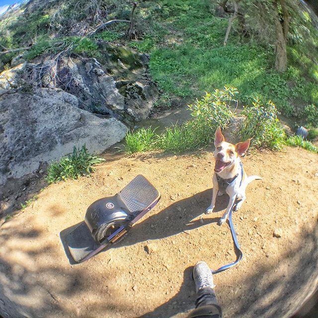 Happy dog! 🐶 Ginger ♥️ @onewheel @ginger_and_lani #bronsoncanyon #trail #hiking #california #thehills #outdoors #thegreatoutdoors #sunny #springsummer2019 #happydog #dogsofinstagram #onewheel #onewheelnation #onewheelxr