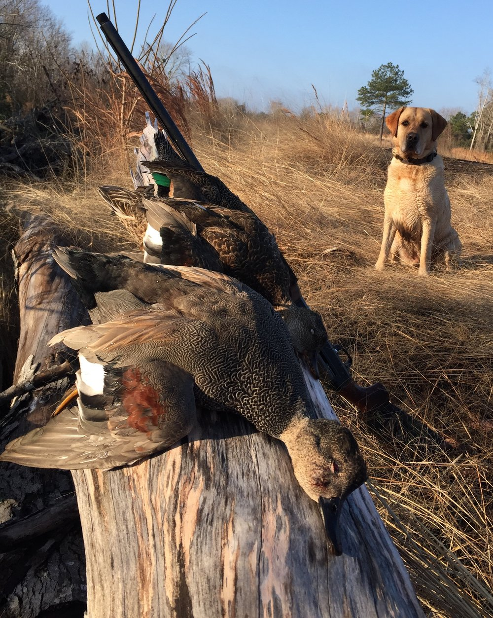 Hoss and Triple on ducks with gun.jpg