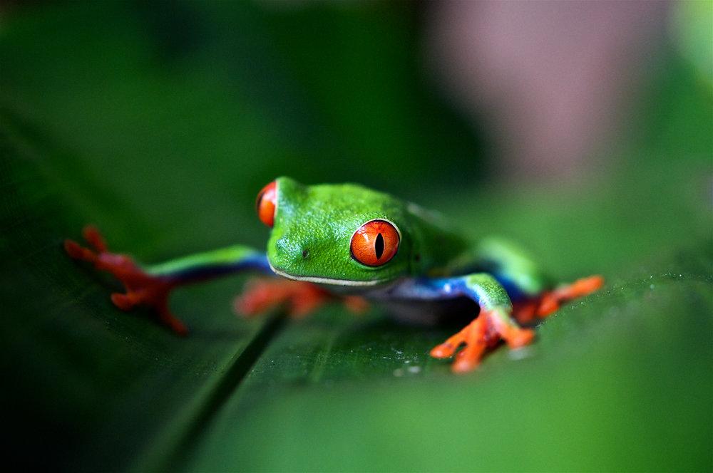 Costa Rica - Si tus hijos son amantes de los animales y la naturaleza, hay una respuesta: Costa Rica. Este país tiene una infraestructura turística excelente.