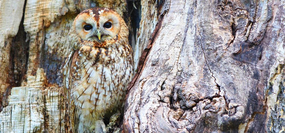 owl33.jpg