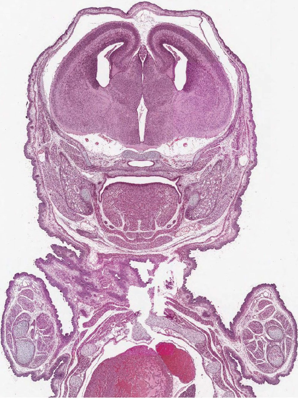Embryo images 2.jpg