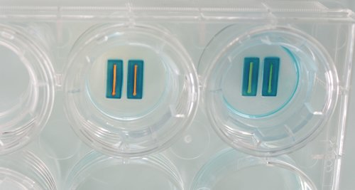 Cell Dish.jpg