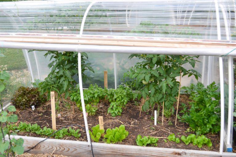 tomatoes7-1-768x512.jpg