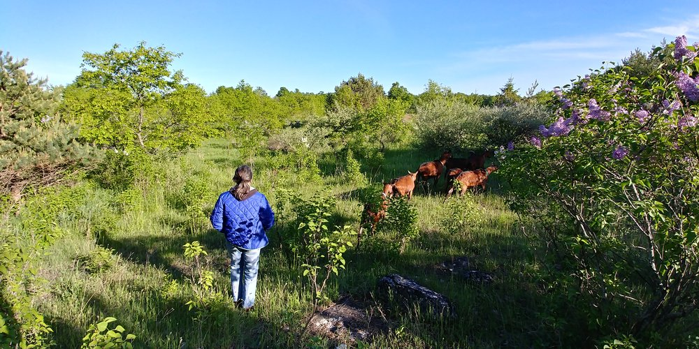 Afternoon walk, Folk Tree Farm