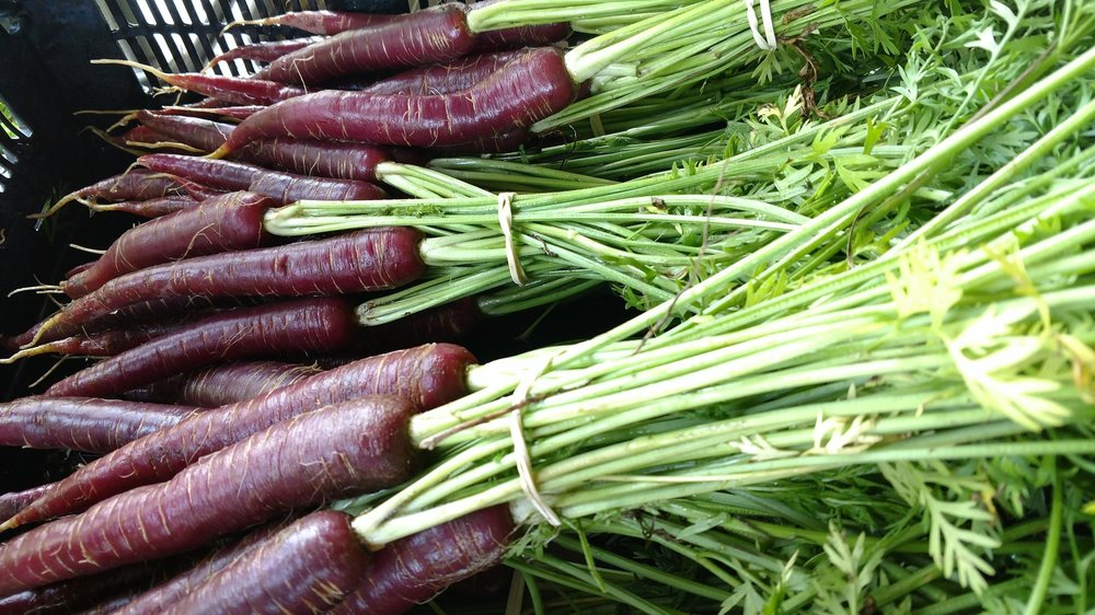 Dragon Carrots, Hoot Blossom Farm