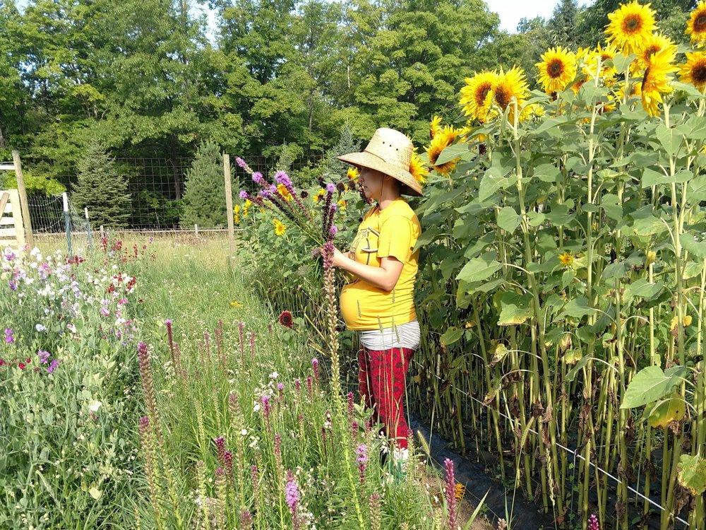Flower Harvest, Hoot Blossom Farm