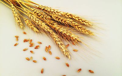 close-up-view-of-wheat-518324359-5a2a22739802070037a84327.jpg