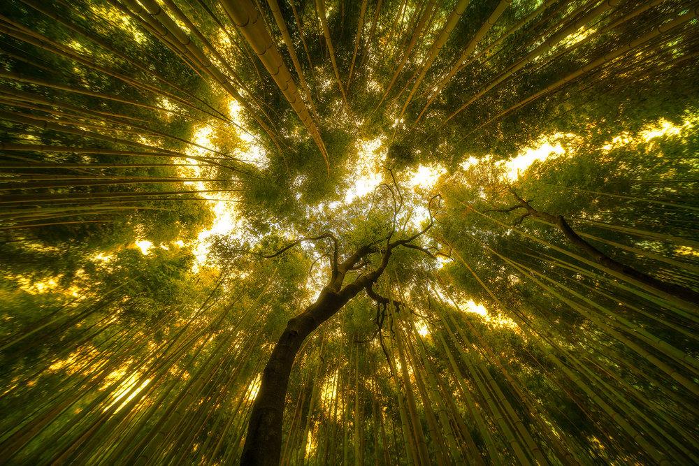Bamboo_Japan_01.jpg