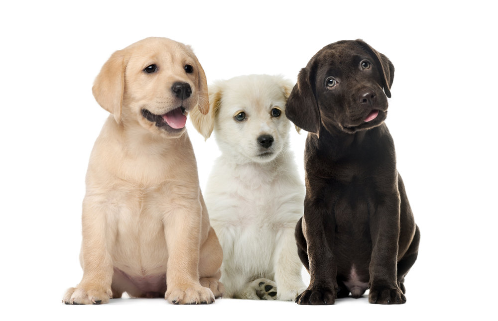 best-puppy-training-class-downers-grove-il