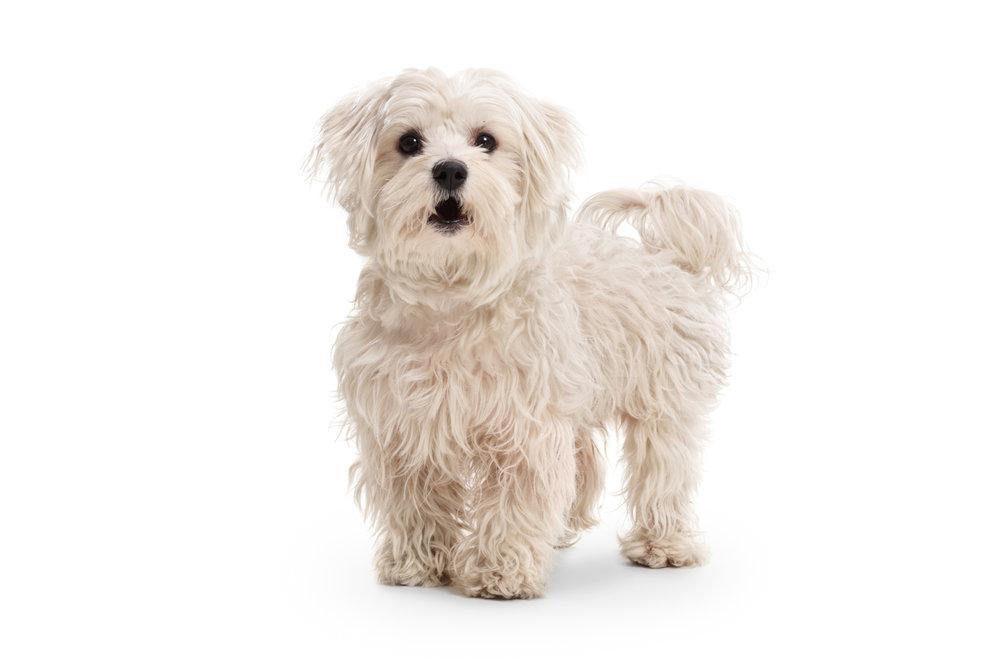 Patient Pups & Dogs -