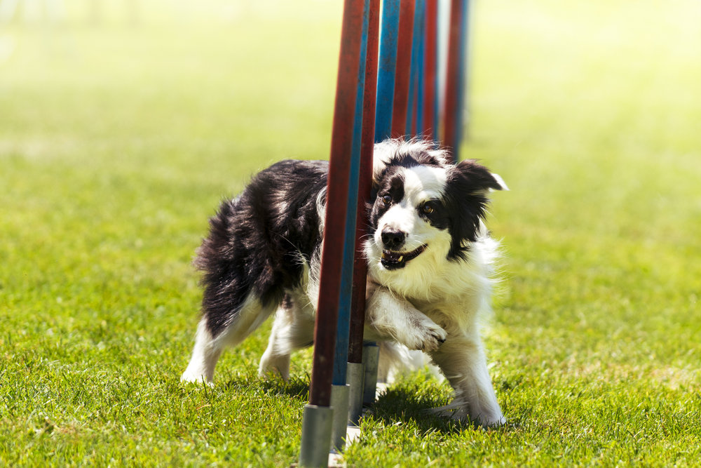 Agility for Fun -