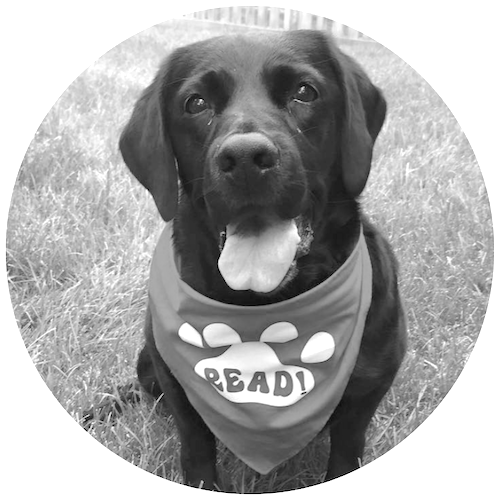 Therapy Dog Practice Evaluation -