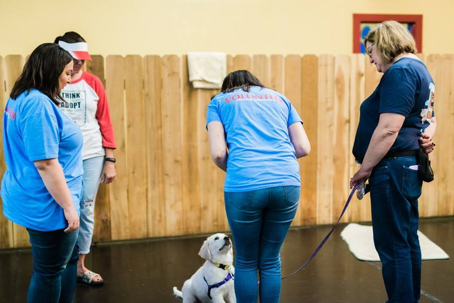 Pam-dog-training-class