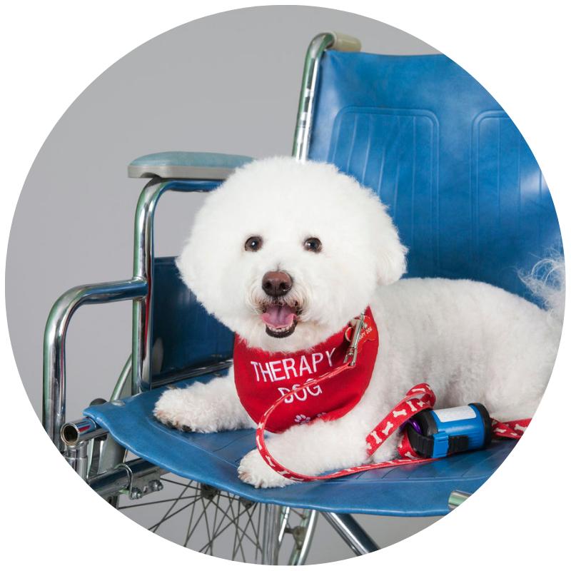 Therapy Dog International (TDI) Evaluation -