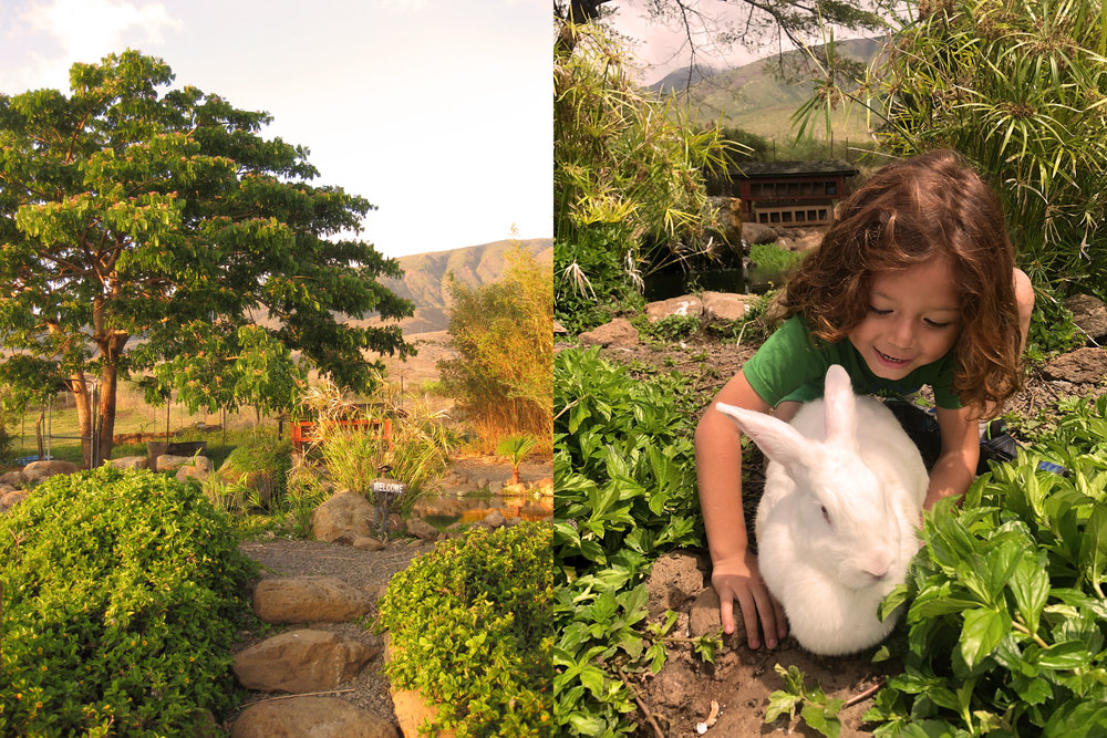 Fish Pond and bunny love!